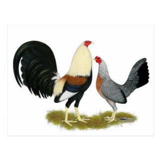 Grey Game Fowl Pair Post Cards