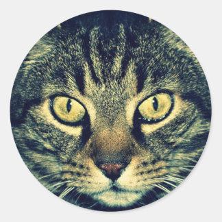 Grey glaring cat round stickers