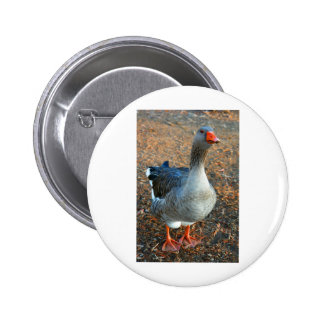 Grey Goose 1 Buttons
