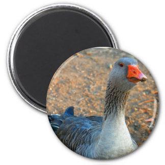 Grey Goose 1 Magnets
