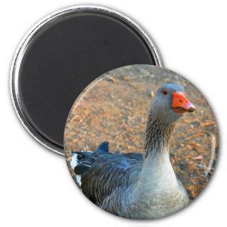 Grey Goose 1 Fridge Magnets
