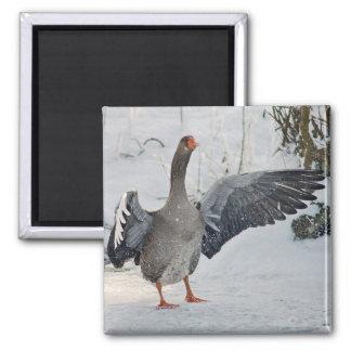 Grey goose refrigerator magnet