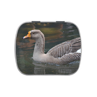 grey goose swimming across bird picture jelly belly candy tin