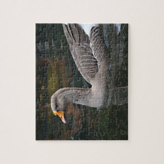 grey goose swimming across bird picture jigsaw puzzle