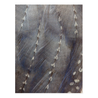 Grey Guineafowl Feather Abstract Postcard