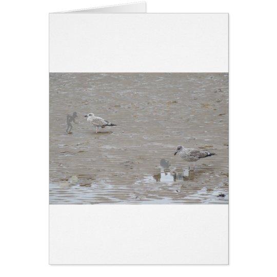 Grey Guys And Gulls Card