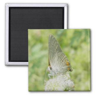 Grey Hairstreak Butterfly Magnet