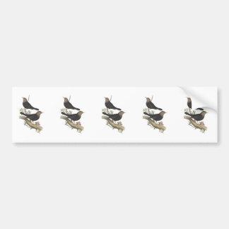 Grey-headed Blackbird Bumper Sticker