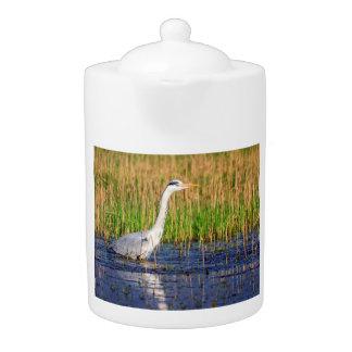 Grey heron, ardea cinerea, in a pond teapot