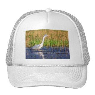 Grey heron, ardea cinerea, in a pond trucker hat