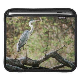 Grey Heron (Ardea Cinerea), South Africa Sleeve For iPads