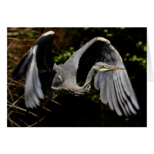 Grey Heron Card