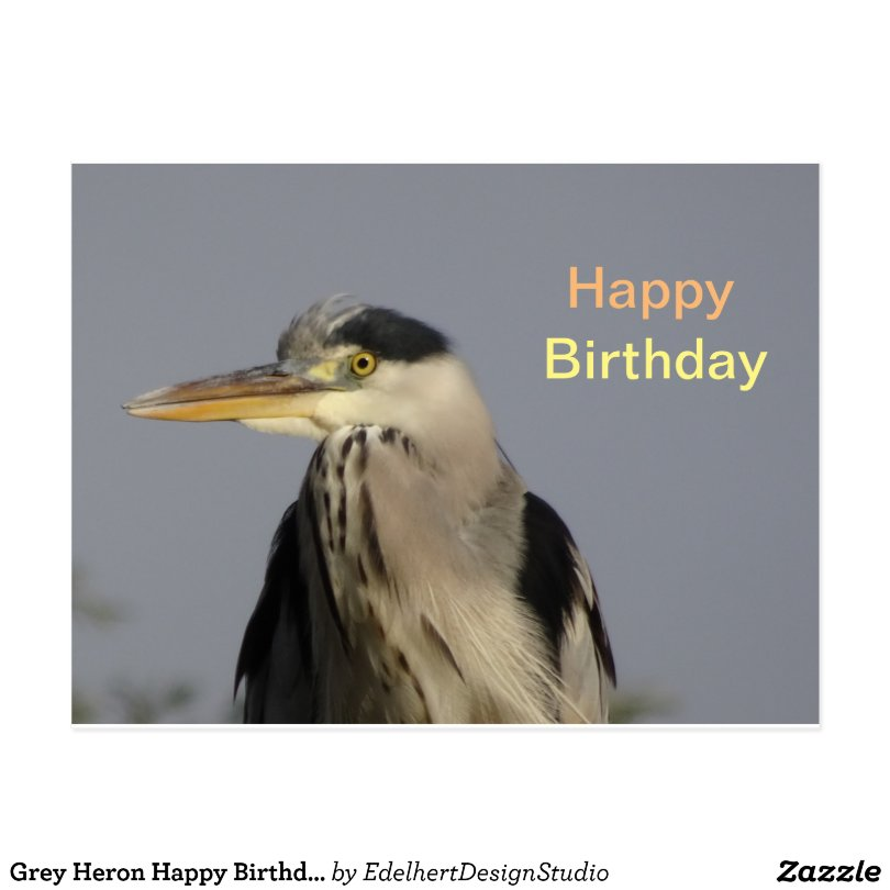 Grey Heron Happy Birthday Postcard