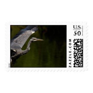 Grey Heron Postage