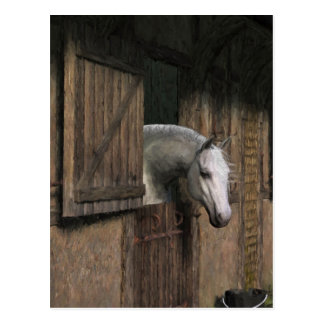 Grey Horse at the Stable Door Postcard