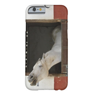 Grey horse in a stable barely there iPhone 6 case