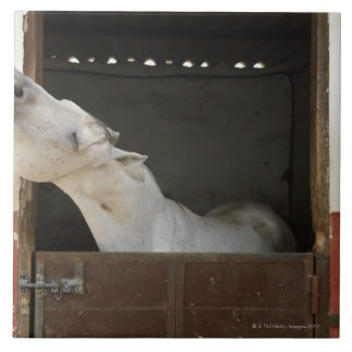 Grey horse in a stable ceramic tile