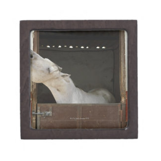 Grey horse in a stable keepsake box