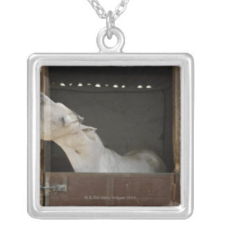 Grey horse in a stable silver plated necklace