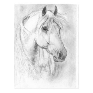 Grey horse portait postcard