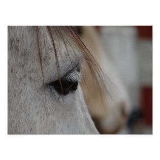 Grey Horse print
