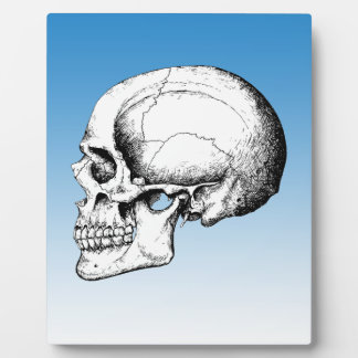 Grey Human Skull side Plaque