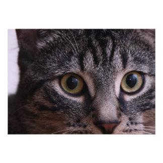 Grey Kitten Face 2 Personalized Invite