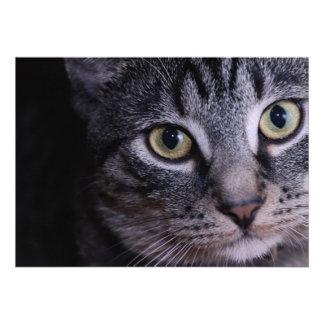 Grey Kitten Face Personalized Invitation