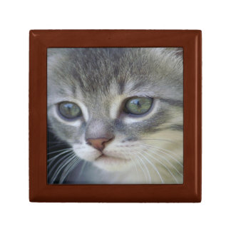 Grey Kitten Jewelry Box