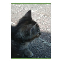 Grey kitten. invitation
