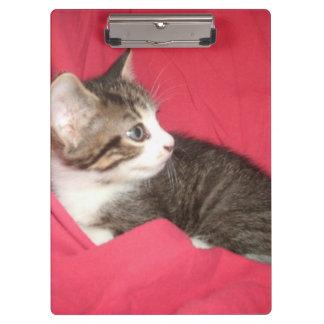 Grey Kitten on Pink Clipboard
