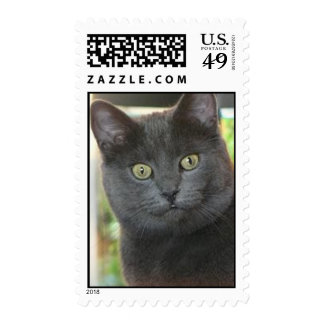 Grey Kitty Postage Stamps