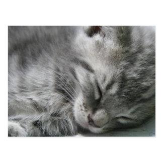 Grey Kitty Sleeping Postcard