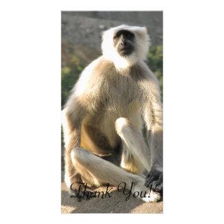 Grey Langur Monkey Sits With Folded Legs Card