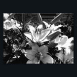 "Grey Lilies Photo Print<br><div class=""desc"">A lot of them fill the frame in black and white</div>"