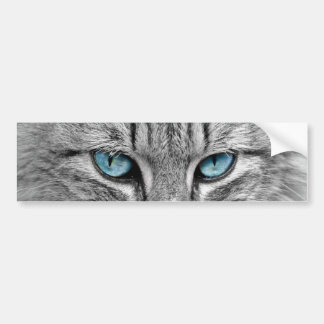 Grey Long  Hair Cat Blue Green Eyes Pet Animal Bumper Sticker
