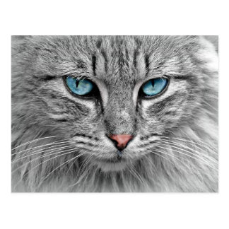 Grey Long  Hair Cat Blue Green Eyes Pet Animal Postcard
