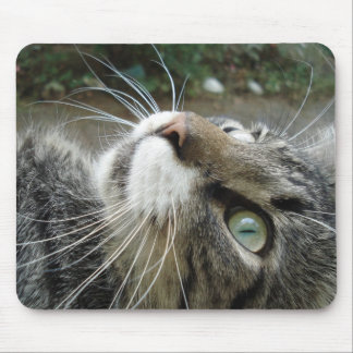Grey Maine Coon Cat Mouse Pad