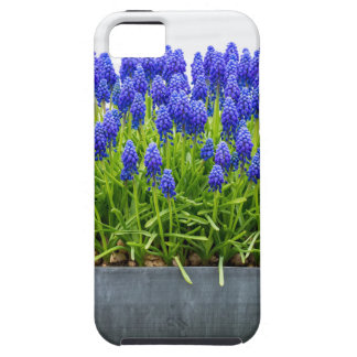 Grey metal flower box with blue grape hyacinths iPhone SE/5/5s case