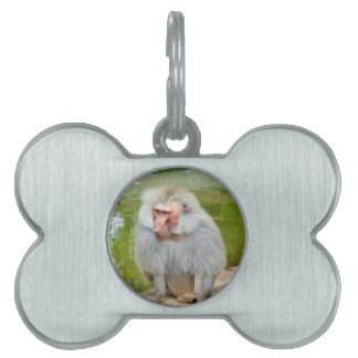 Grey Monkey, Ape Macaque, Nature, Animal Wildlife Pet Tag