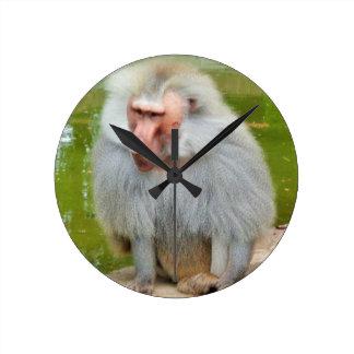 Grey Monkey, Ape Macaque, Nature, Animal Wildlife Round Clock