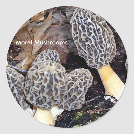 Grey Morels, Morel Mushrooms Classic Round Sticker