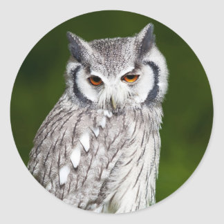 Grey owl perched with green blurred background classic round sticker