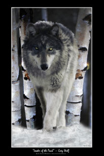 alpha wolf accessories zazzle