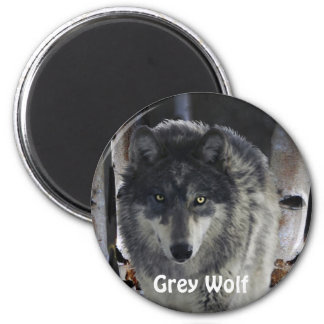 GREY PACK WOLF Collection 2 Inch Round Magnet