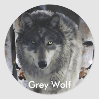 GREY PACK WOLF Collection Round Stickers
