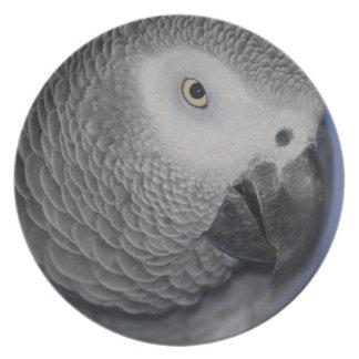 Grey Parrot Melamine Plate