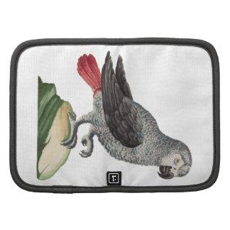 Grey Parrot - Psittacus erithacus Planners