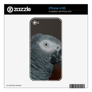 Grey Parrot Decals For The iPhone 4