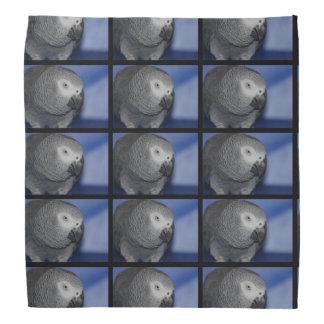 Grey Parrot Bandana